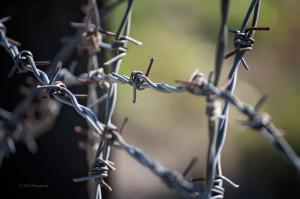 'Dachau Barbed Wire' by Photographer Debbi Nelson. © Copyright 2016 Debbi Nelson dba Photograzia
