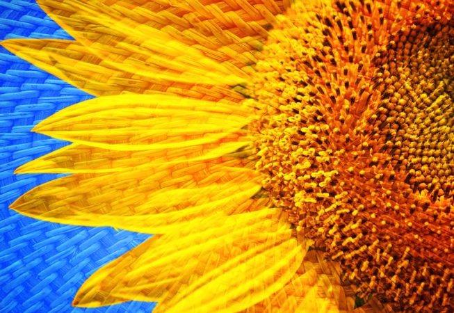 'The Sunflower' by Photographer Debbi Nelson. © Copyright 2016 Debbi Nelson dba Photograzia