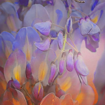 'Wisteria Wonder' by Photographer Debbi Nelson. © Copyright 2016 Debbi Nelson dba Photograzia